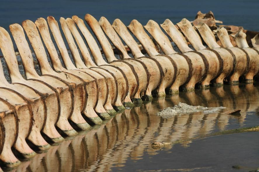 whale keyboard
